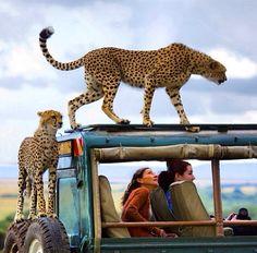 African Safari (Kenya)