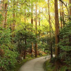 【sec.ainopic】さんのInstagramをピンしています。 《京都行きたい~すぐ行けるけど😂 #大河内山荘 #京都 #嵐山 #嵐山散策 #森林 #森林浴 #マイナスイオン #自然 #カメラ女子 #そうだ京都行こう #kyoto #arashiyama #japan #nature #canoneoskissx7 #instagood #instajapan #autumn 📷 2016.11.30》