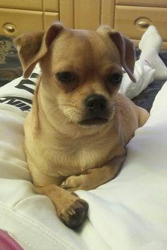 Leylunka 8 mesiacov French Bulldog, Dogs, Animals, Animales, Bulldog Frances, Animaux, Doggies, Animal, Pet Dogs