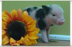 Piggy :)