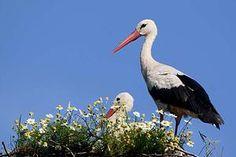 Kinds Of Birds, Bird Feathers, Pet Birds, Bald Eagle, Creatures, Summer Time, Image, People, Art
