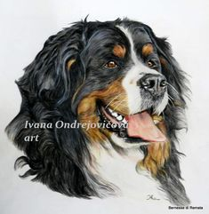 Bernese Mountain, Mountain Dogs, Dog Art, Animals, Animales, Animaux, Bernese Mountain Dogs, Animal, Animais