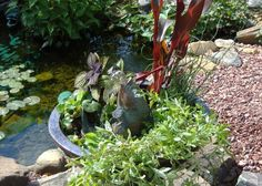 Here's a really easy to assemble Container Fountain. Complete with Aquatic Plants & a spitting Koi. Aquatic Plants, Porches, Koi, Pools, Fountain, Garden Sculpture, Container, Canning, Outdoor Decor