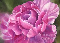 Peony Tulip Painting by Sharon Freeman - Peony Tulip Fine Art Prints and Posters for Sale
