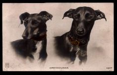 Greyhound Vintage Postcard