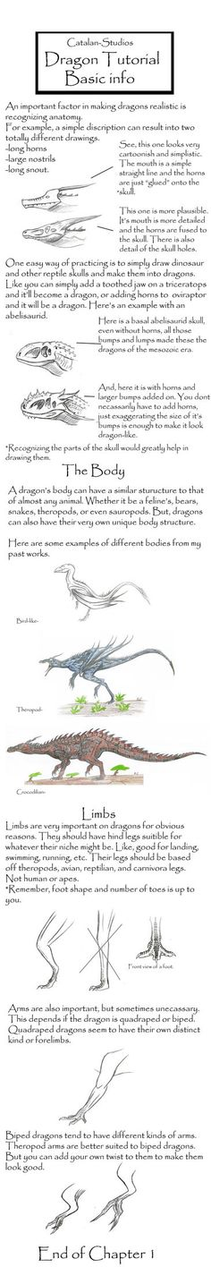 Dragon Tutorial Chpt 1 by ~Kevin-Studios on deviantART