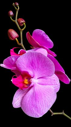 Exotic Flowers, Tropical Flowers, Amazing Flowers, Spring Flowers, Beautiful Flowers, Phalaenopsis Orchid, Orchid Plants, Floral Wallpaper Iphone, Texture Images