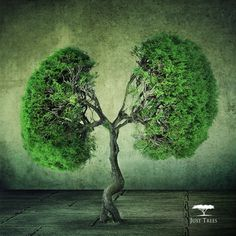 Trees are the lungs of the planet. Do your bit by planting a tree today!
