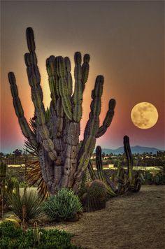 ~~Cactus Garden, Balboa Park | surreal moonscape, San Diego, California by Artypixall~~