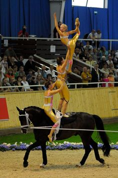 Trick Riding, Horse Supplies, Aerial Silks, Acro, Vaulting, Horse Stuff, Horse Riding, Beautiful Horses, Matilda