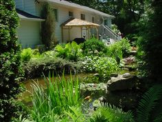"In July every year we have an event called "" Secret Gardens "" Last year we visited some of the best decorated backyards in the neighborhood and this guy had turned the complete backyard into a pond..."