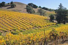 Sonoma Valley, California