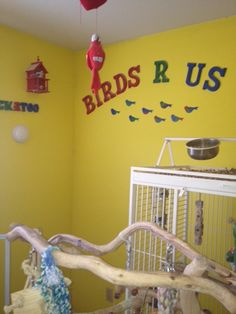 A Partial look at My Room for My four Parrots