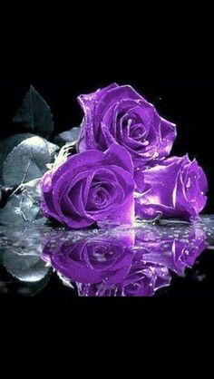 Flowers purple roses violets ideas for 2019 Love Rose, My Flower, Pretty Flowers, Purple Flowers, Colorful Roses, Flowers Nature, The Purple, All Things Purple, Shades Of Purple
