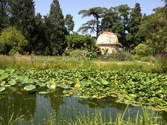 Montpellier - Jardin des plantes - juillet 2013