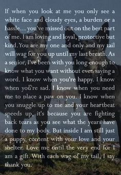 dog training,teach your dog,dog learning,dog tips,dog hacks I Love Dogs, Puppy Love, Pet Loss Grief, Dog Poems, Pet Remembrance, Yorkshire Terrier Puppies, Pet Memorials, Dogs And Puppies, Doggies