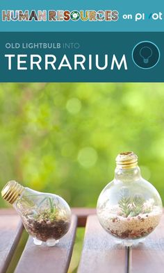 Upcycle an old lightbulb into an adorable little terrarium! The next time you find yourself throwing out a lightbulb, think again. Learn more about improving recycling habits and what you can create using discarded objects.
