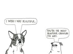 EVERY Boston Terrier is beautiful!