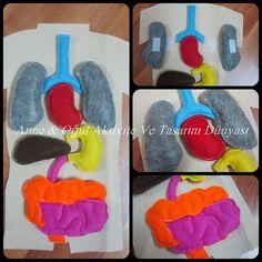 Tatlı Tosbağam İle Yolculuk: Keçeden İç Organlarımız