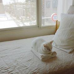 たたんだばかりのタオル