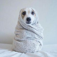 Mister Woof Loves... #blankets