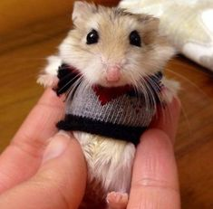 A hamster in a sweater. We repeat. A hamster. In a sweater. This reminds me of Gus Gus from Cinderella!