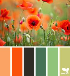 { color nature } Art Print by Design Seeds - $16.00