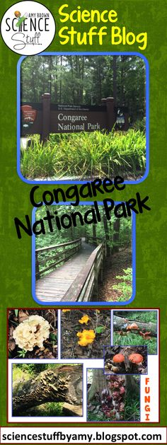 I was fortunate to be able to visit Congaree National Park. Check out my blog post about this fabulous old growth forest.