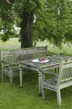 Old table and benches under tree