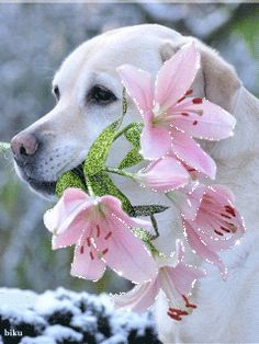 See the PicMix White dog with flowers. belonging to StellaStai on PicMix. Spring Animals, Baby Animals, Cute Animals, Pretty Gif, Beautiful Gif, Cute Dogs Images, Free Images, Gato Gif, White Dogs