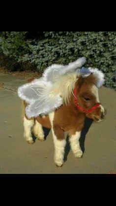 Miniature horse wearing a costume. it's a mini horse angel! Cute Horses, Pretty Horses, Horse Love, Beautiful Horses, Animals Beautiful, Mini Horses, Horse Fly, Baby Horses, Funny Horses