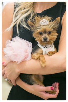 @PrincessFionaMae Teacup Yorkshire Terrier In her Princess TuTu and Tiara