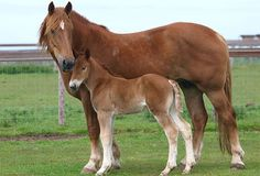 Arrange a gift to the Suffolk Punch Trust