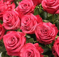 Buy Wholesale Roses Online in Bulk Wholesale Roses, Buying Wholesale, Diy Wedding Flowers, Buy Roses, Rose Flowers, Blossoms, Different Colors, Special Events, Organic