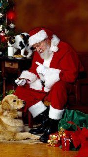 Santa Claus, dog, and cat sharing treats.  Did you notice the cat drinking Santa's milk?