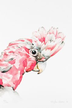 The Galah is a pink and grey coloured cockatoo found in most areas of Australia.