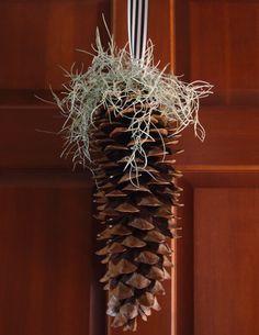 Sugar Pine Cone Decorations on
