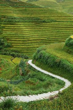 Longsheng Rice Terrace, Guangxi, China 龍勝棚田  | China photo