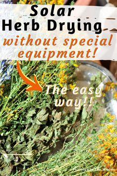 Preserve Fresh Herbs, Herb Pots, Organic Herbs, Growing Herbs, Medicinal Herbs, Herb Garden, Preserves, Harvest, Easy