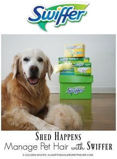 Shed Happens Manage Pet Hair with #Swiffer #SwifferFanatic #ad