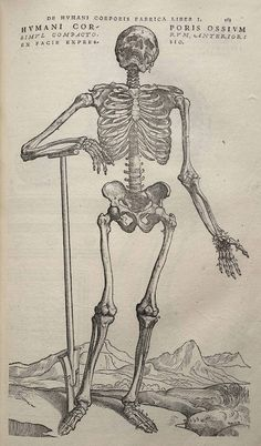 One of the most important scientific books of the Renaissance was On the Fabric of Human Anatomy. Published in 1543, it was a seven-volume work by the physician Andreas Visalius and illustrated by one of the students of the great Renaissance painter Titian. Although the primary purpose of On the Fabric of Human Anatomy was to provide an accurate picture of human bones, muscles, and organs, it is filled with anatomical drawings set in odd places. This skeleton appears to be going on a hike in…