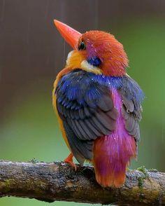 Very beautiful bird - Imgur