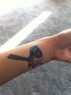 I made some new friends today. Blue wren