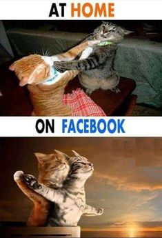 Cat Lovers Community - Your Daily Source of Cat Stories and Funny Cat Memes