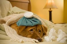 Seven Home Remedies for Your Dog