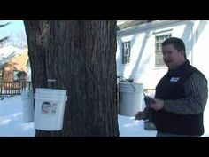 Watch the video. Make Maple Syrup - Tap Maple Trees To Collect Maple Sap (Part 1)