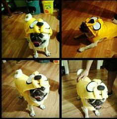 Idea for Zooey's Jake the dog costume to go with Stevens Finn costume
