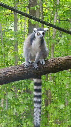 Toronto Zoo, Bear, Animals, Animales, Animaux, Bears, Animal, Animais