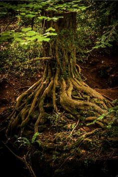 Grounding. Imagine roots shooting from the sole of your feet deep down in the ground. Visualize this when the energies you feel are too intense. Sent excess energy into the ground. Also, best to be bare foot on soil or grass, but it's not a necessity. This technique is also protecting.