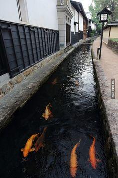 Japan...Koi Canal